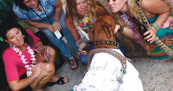 Staff photo by Emmy Errante. Guests greet Kermit, a Doberman-mix with severe hip dysplasia at the 2014 Bow Wow Luau and Cat's Meow on Saturday, June 21 at Bank's Channel Pub and Grille.