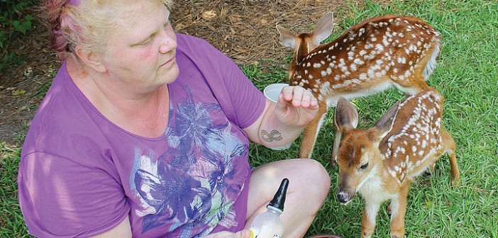 Staff photo by Cole Dittmer. Coastal Carolina Wildlife Rehab owner Jennifer Leonard feeds two fawns with a formula of goat milk, yogurt, heavy whipping cream, and vitamin and mineral supplements.