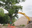 Staff photo by Cole Dittmer. Crews working at the Sidbury development at the corner of Summer Rest Road and Wrightsville Avenue tear down an oak tree to make way for the three multi-use buildings planned for that project.