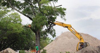 Commissioners uphold tree-removal ordinance