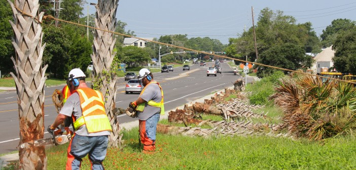 NCDOT crews use chainsaws to cut down the plan trees lining Wrightsville Avenue just west of the Heide Trask Drawbridge.