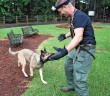 Staff photo by Emmy Errante.  Jorga and her handler Randy Searls play at Empie Park Monday, Aug. 4.