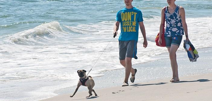 Dogs return to beach