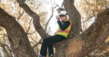 Staff photo by Allison Potter. Joetta Cobb sits in one of the last two live oak trees to be trimmed in the median of Live Oak Drive Wednesday, March 18.