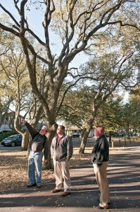 Staff photo by Allison Potter. Forester Richard Olson, left, points out cuts made on the live oaks to Wrightsville Beach town manager Tim Owens and police chief Dan House.