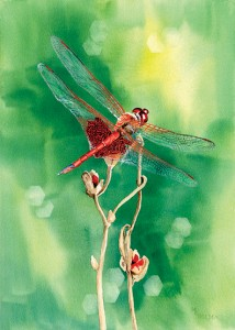 Red Dragonfly, a watercolor by Mary Ellen Golden.