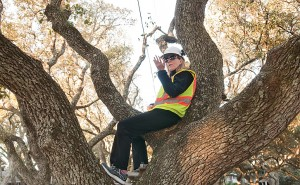 Joetta Cobb sits in one of the last two live oak trees to be trimmed in the median of Live Oak Drive March 18.