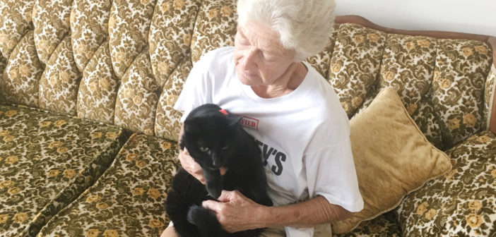 After nearly a month, missing cat found in neighbor's wall